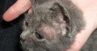 Чем лечить лишай у кошки